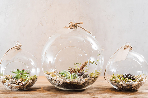 Brighten Your Desk this Winter_CLV Group_Terrarium_DIY Terrarium