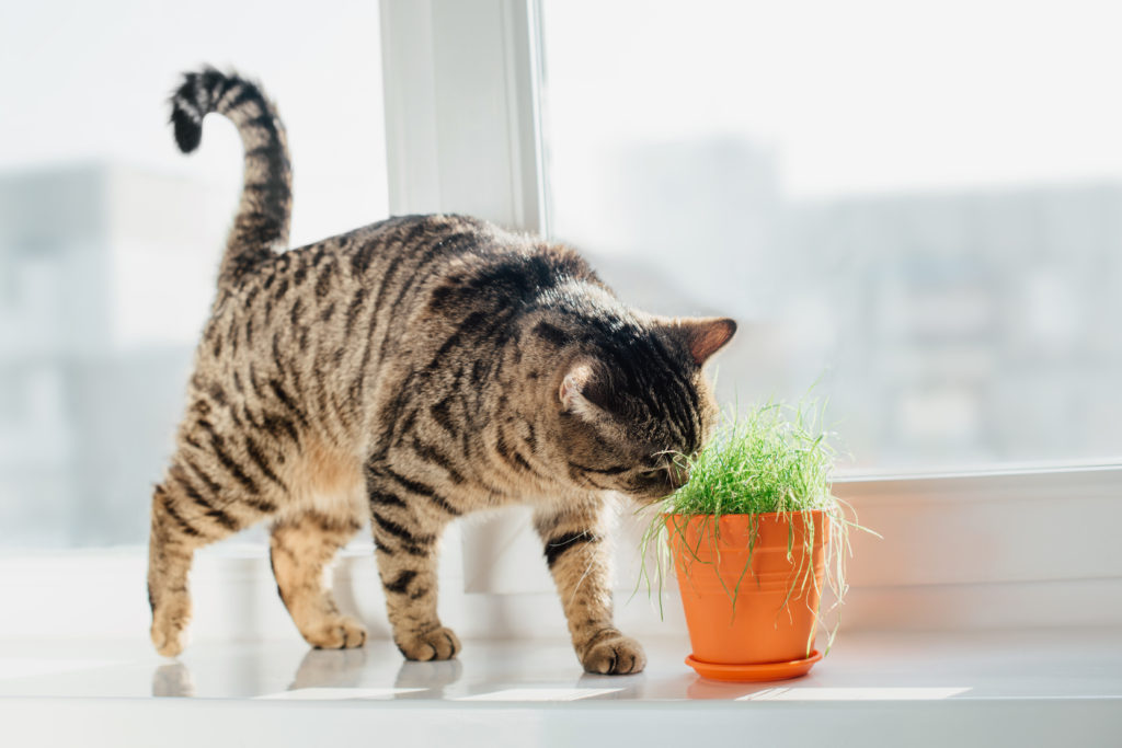 ExternalBlog-Keep-Your-Pets-Safe-with-Non-Toxic-Plant-Choices-for-Your-Apartment-FeaturedImage-March10