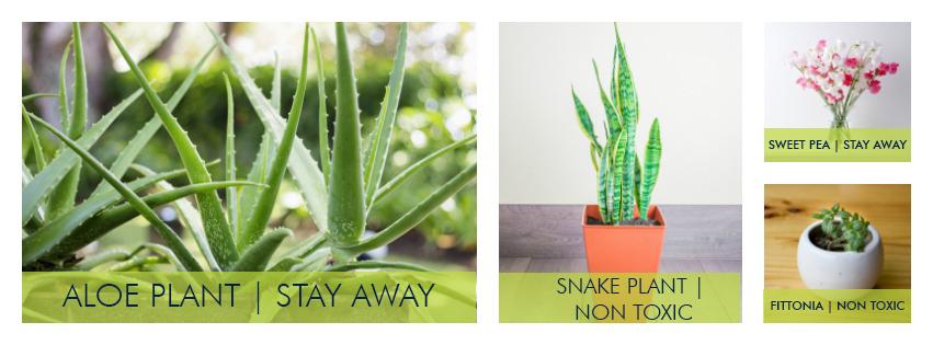 Plants-Pets-Collage