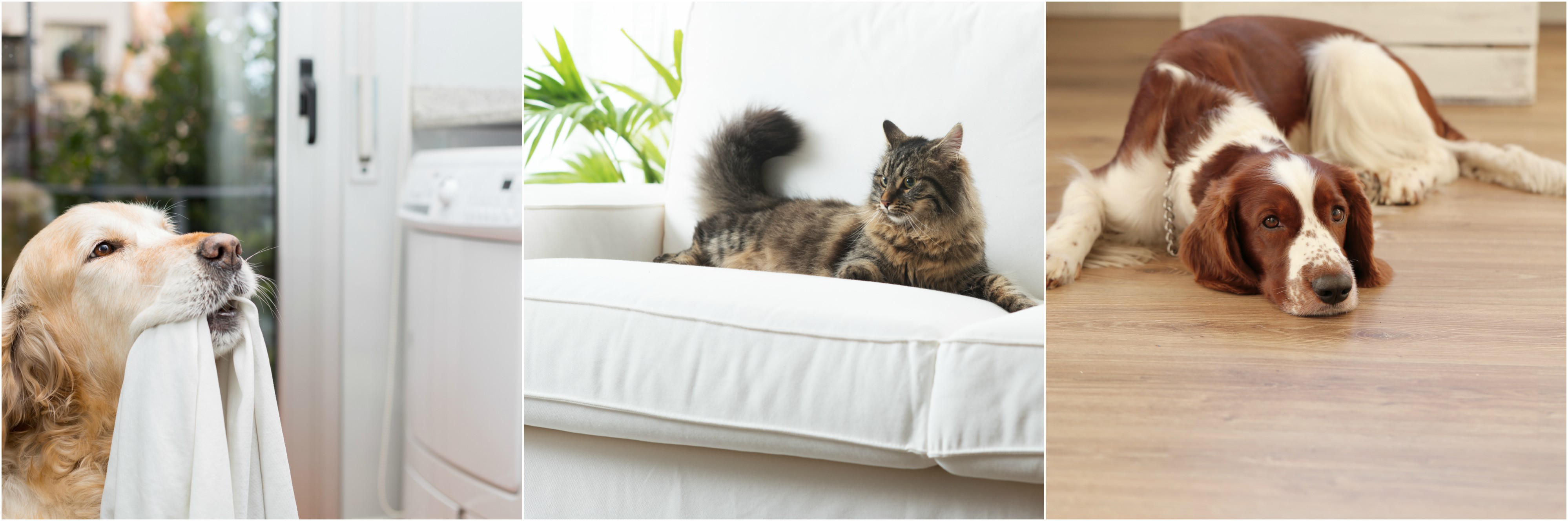 Your pets love to lounge around the apartment, but try to keep your clothing out of reach, and simple items such as lint rollers and microfiber towels on hand for quick cleaning.