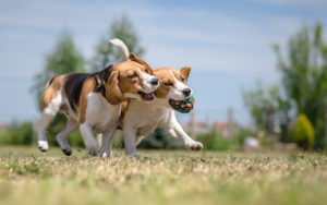 CLV-Group-Spring-Activities-To-Do-With-Your-Pet-Playdate