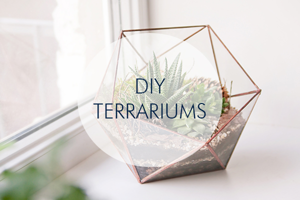 Click here to learn how to build your very own terrarium!